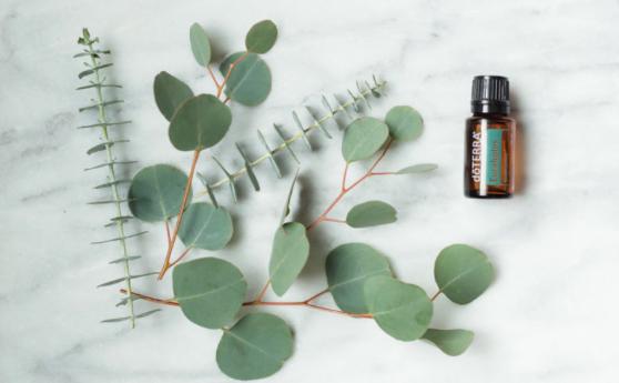 Doterra eucalyptus et ses bienfaits
